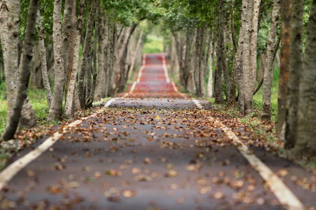 road-nature-trees-branches-38537